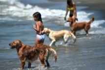 Sur le littoral romain, une plage qui a du chien