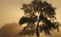 Ces arbres extraordinaires qui battent des records