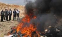 Destruction de plus de 12 tonnes de chira à Casablanca
