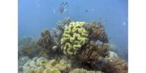 Les eaux dans les fonds océaniques ne se réchauffent plus depuis 2005