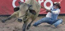 En Colombie, le Mondial de coleo, où l'art de faire chuter le taureau