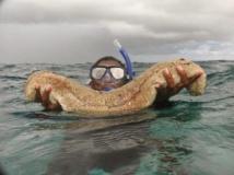 Un réseau de pêche  illicite de concombre marin démantelé à Dakhla
