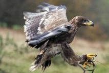L'aigle rabaisse ses ailes face aux turbulences, une idée à creuser pour l'aéronautique