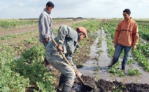 L'avenir du Maroc est dans les coopératives agricoles