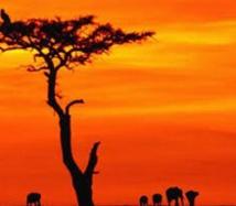 Démocratiser les partis politiques africains