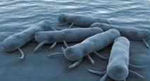 Les antibiotiques doperaient la propagation de la salmonelle chez certains animaux