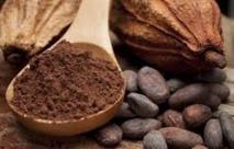 Les flavanols de cacao pourraient freiner  le déclin cognitif