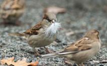 L'Europe a perdu  421 millions  d'oiseaux en 30 ans