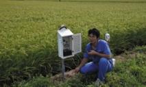 Les riziculteurs japonais, la modernisation ou le déclin