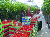 Levée de boucliers en Europe contre les bas salaires des ouvriers agricoles marocains