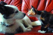 La quête de récompenses, l'une des clefs de la domestication du chat