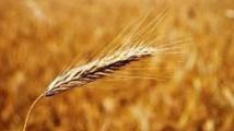 Tenue du CA de l'ORMVAD au titre de la campagne agricole 2014