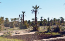 Forum international des oasis