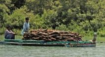 Le déclin de la mangrove, barrière naturelle contre les cyclones au Pakistan