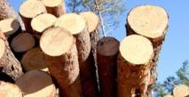 Saisie de plus de 200 m3 de bois de provenance illicite