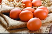 Les Marocains consomment de plus en plus d'œufs