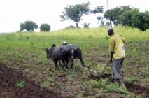 Deux erreurs à éviter pour assurer l'autosuffisance alimentaire en Afrique