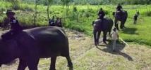 Des éco-guerriers pour protéger forêts et espèces en danger en Indonésie