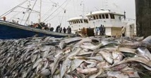 """La mise en œuvre de l'accord de pêche  avec l'UE """"globalement satisfaisante"""""""