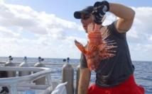 Au bout des Keys de Floride, les rascasses prolifèrent et la chasse bat son plein