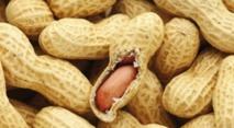 Faire manger de l'arachide aux nourrissons réduit les allergies