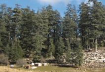 Comment planter un milliard d'arbres au Maroc