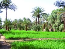 Zoom sur le rôle des oasis marocaines