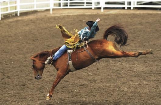 Les festivals à voir une fois dans sa vie : Le stampede de Calgary (Canada)