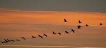 L'avifaune nationale compte 480 espèces entre oiseaux résidents et migrateurs