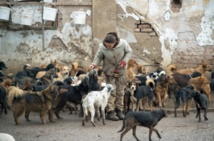 Sasa, le chômeur serbe aux 450 chiens
