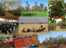 Le Maroc, premier exportateur arabe et africain des  produits agricoles et de textile vers le marché russe