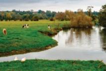 La contamination des cours d'eau par les insecticides sous-estimée