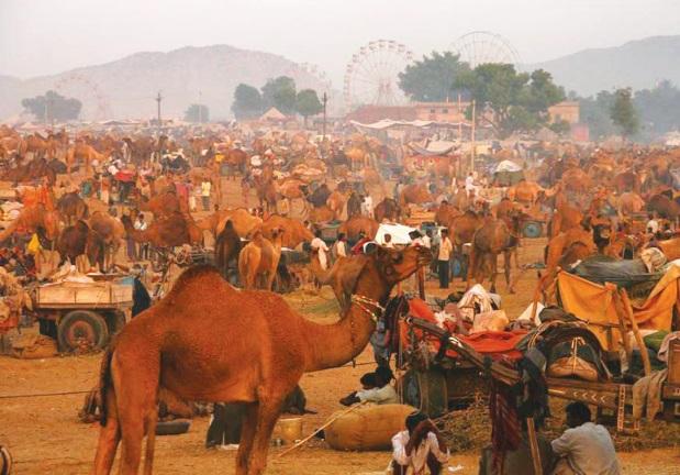 Les festivals à voir une fois dans sa vie : Foire aux chameaux de Pushkar (Inde)