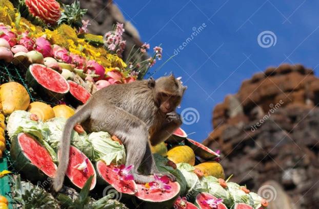 Les festivals à voir une fois dans sa vie : Le buffet des singes (Thaïlande)