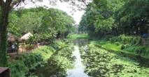 Une forêt tropicale  foisonne à Manille entre  dépotoir et bidonville