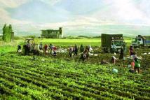 Les exportations agricoles du Liban asphyxiées  par le conflit en Syrie