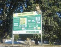 Des élèves en chasse au trésor  au Parc national d'Ifrane