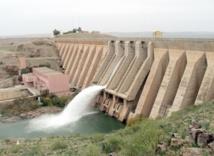 Deux millions de carpillons dans le barrage Al Massira