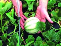 Les jeunes chercheurs appelés à s'investir dans la recherche agricole