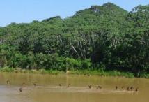 Les dernières tribus isolées d'Amazonie menacées par les contacts avec l'extérieur