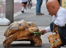 Insolite :  Le croque-mort et la tortue