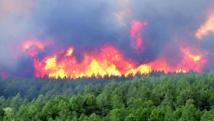 Protection et valorisation du domaine forestier