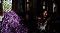 Les rouleurs de bidis se tuent à petit feu en Inde