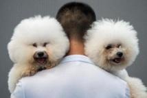 Les chiens n'aiment pas les gens  sans égard pour leurs maîtres