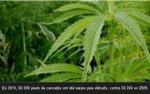 Le cannabis a une efficacité  thérapeutique limitée
