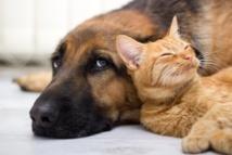 Nourrir chiens et chats, une industrie qui ne connaît pas la crise