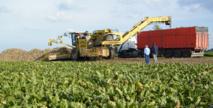 Campagne  agricole record  à Doukkala-Abda