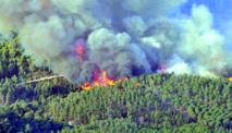 Extinction de deux incendies de forêt dans la préfecture de M'diq-Fnideq