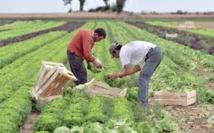 La province d'Al Haouz à l'heure du Plan Maroc vert