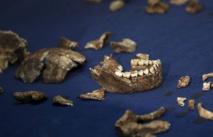 Découverte en Afrique du Sud de l'Homo naledi
